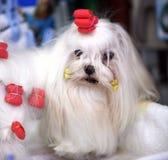 внапуск собаки Стоковые Фото