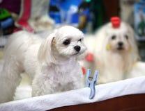 внапуск собаки Стоковая Фотография