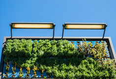 Внешний вертикальный сад стены Стоковое фото RF