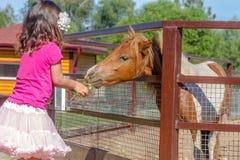 Внешний портрет молодой усмехаясь лошади девушки ребенка подавая на fa Стоковые Изображения