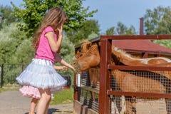 Внешний портрет молодой усмехаясь лошади девушки ребенка подавая на fa Стоковая Фотография RF