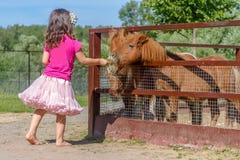 Внешний портрет молодой усмехаясь лошади девушки ребенка подавая на fa Стоковое Фото