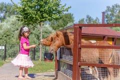 Внешний портрет молодой усмехаясь лошади девушки ребенка подавая на fa Стоковая Фотография