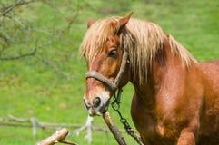 Внешний портрет лошади проекта Стоковое Изображение