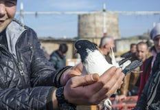 Внешний рынок птицы в Стамбуле Стоковые Изображения