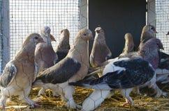 Внешний рынок птицы в Стамбуле Стоковые Фотографии RF