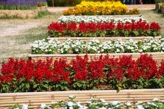Внешний цветочный сад Стоковые Изображения RF