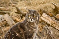 внешний tomcat Стоковая Фотография
