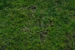 Внешняя текстура травы Стоковые Фото