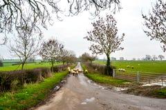 Вне для прогулки - Woodend стоковое фото