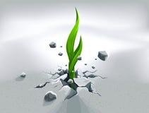 вне нажимающ росток сильный Стоковое Изображение RF