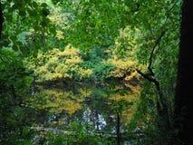 Вниз берег реками Стоковые Фотографии RF