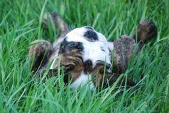 вниз внешняя сторона щенка травы стоковая фотография rf