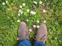 Вниз - - земля на зеленой траве Стоковая Фотография