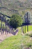 Вниз на краю виноградника Стоковые Фотографии RF