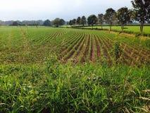 Вниз на ферме Стоковая Фотография