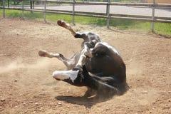 вниз падая лошадь Стоковые Фото