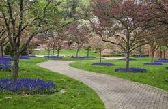 вниз путь сада Стоковое Фото