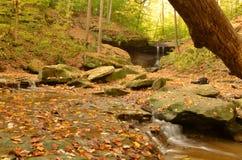Вниз река от голубой курицы падает в осень стоковая фотография rf