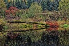 вниз река Стоковое Изображение RF