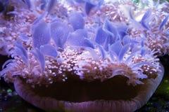 вниз рыбы jelly внешняя сторона стоковое изображение