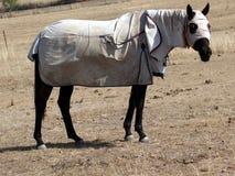 Внимательная лошадь в paddock Стоковые Изображения