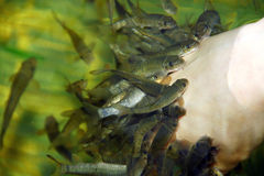 Внимательность кожи спы рыб Стоковая Фотография RF