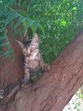 Внимательный кот на дереве для еды стоковое фото rf
