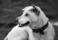 Внимательная белая собака Стоковые Фотографии RF