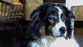 внимательная собака стоковое изображение