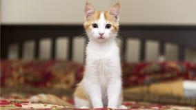Внимательный котенок Стоковая Фотография RF
