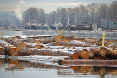 Вносить в журнал леса зимы Стоковые Фотографии RF