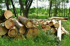 Вносит дальше лес в журнал стоковое фото