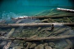 Вносит дальше озеро в журнал на озерах Joffre, Pemberton, Британскую Колумбию Стоковая Фотография