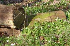 Вносит дальше древесины в журнал Стоковое Изображение RF
