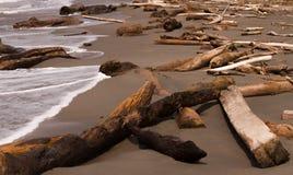 Вносит дальше пляж в журнал стоковые фотографии rf