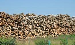 вносит деревянное в журнал Стоковая Фотография RF