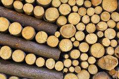 вносит деревянное в журнал стоковые изображения
