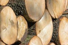 вносит деревянное в журнал стоковые изображения rf