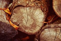 вносит деревянное в журнал Стоковое Изображение