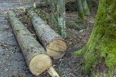 вносит древесину в журнал Стоковые Фотографии RF