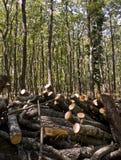 внося в журнал древесина Стоковые Изображения RF