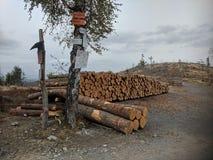 Внося в журнал лес в горе Biskupia Kopa стоковые изображения rf