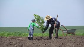 Внук и внук засаживают дерево совместно, grandpa помощи ребенка, сыгранность акции видеоматериалы