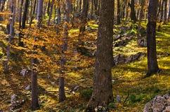 Внутренние леса национального парка Djerdap на день падения солнечный Стоковое Фото
