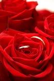 внутренние красные кольца подняли Стоковое Изображение RF