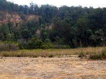 Внутренний лес Стоковые Изображения