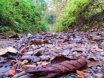 Внутренний лес Стоковые Изображения RF