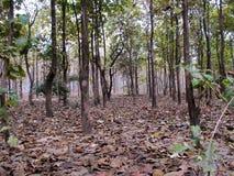 Внутренний лес Стоковая Фотография