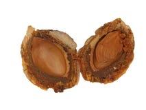 внутренний камень персика Стоковые Фото